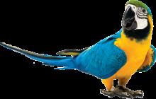 negozio-animali-porto-san-giorgio-uccelli